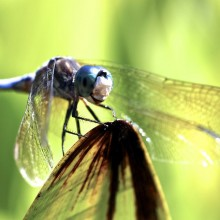 smile of a dragonfly
