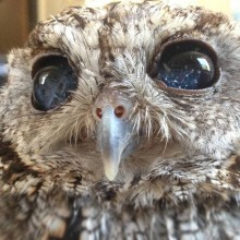 Cute Blind Owl Has Eyes That Look Like Stars in Night Sky