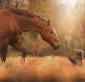 Hello Buddy, Horse And The Dog