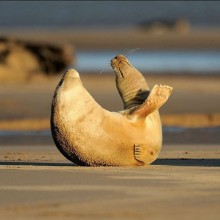 Baby Seal Stretching
