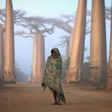 Girl Walks Among The Baobab Trees, Madagascar