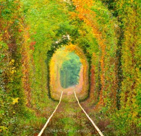 Most Beautiful Train Tunnel In The World