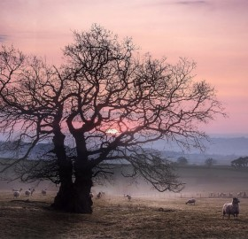 Sunset At Countryside, West Great Britain