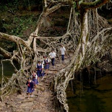 Tree Root Bridge, India