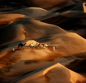 Tribesmen Leads His Camels Through Desert