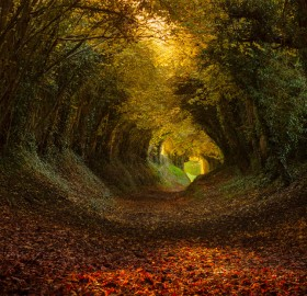 Tunnel of Trees, Halnaker, England