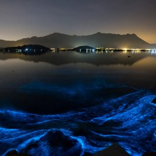 Blue Glowing Sea Phenomenon, Hong Kong
