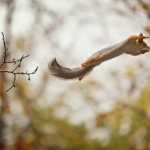 """I Believe I Can Fly"" Squirrel"
