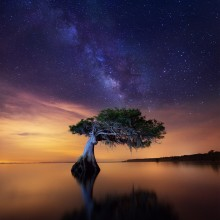 Lonely Tree In A Lake, Florida