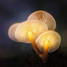 Magic Mushrooms Glow