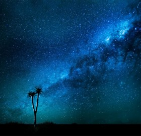 Milky Way Over Quiver Tree