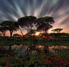 Sunset At Swamp