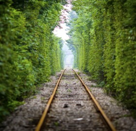 Tree Rail Tunnel, China