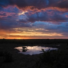 Rhino In The Pond During Sunset