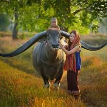 Farmer Family With Buffalo, Thailand