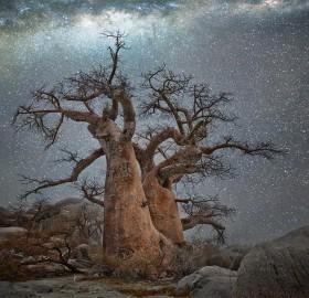 Old Tree At Night, Botswana