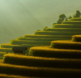 Rice Field Terraces, Vietnam