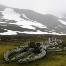 Whale Fossil Found In Antarctica