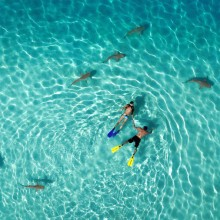 Snorkeling With Sharks