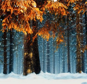 Snowy Forest, Germany