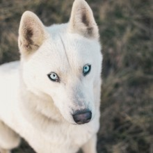 Dog With Beautiful Eyes