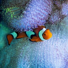 We Found Nemo Too