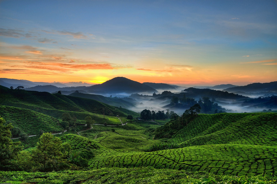 cameron highlands, malaysia photo