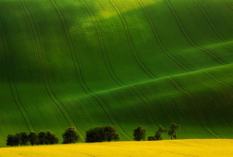 green waves on field