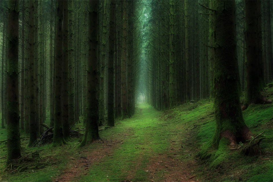 10  Best fairy tale forest