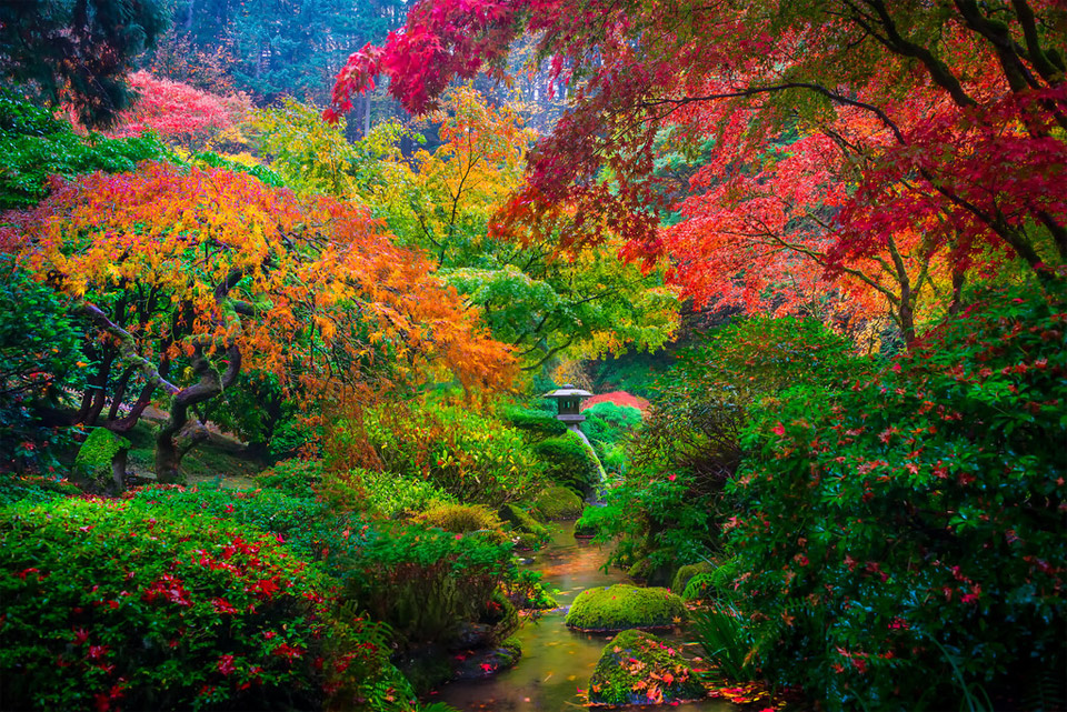 the colors of japanese garden in portland