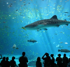 biggest aquarium in the world