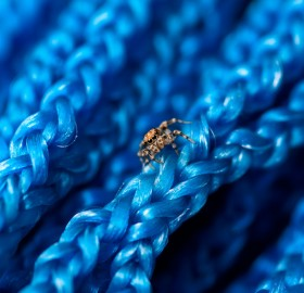 small spider on blue net