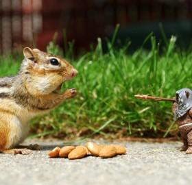 squirrel versus ewok