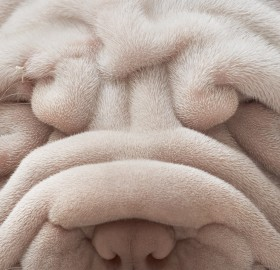 do you love my wrinkles?
