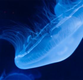 jellyfish in the dark