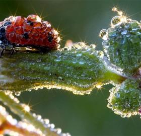 ladybug after the rain