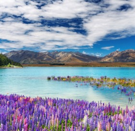lake tekapo in new zealand