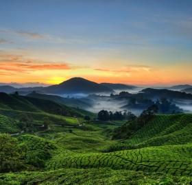 cameron highlands, malaysia