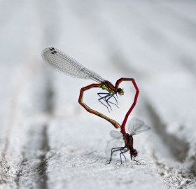 dragonfly heart shaped