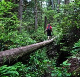 lush rainforest of canada
