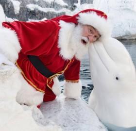 santa visits san diego sea world
