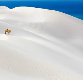 socotra island, yemen