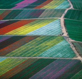tulip fields from above, holland
