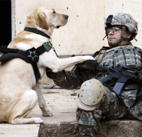 a soldier and his dog in iraq
