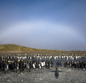 white rainbow over penguins