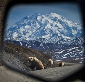 bears in my side view mirror