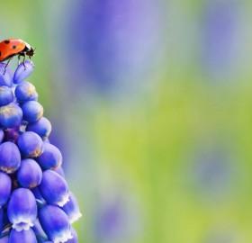 the observer ladybug