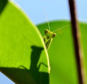 dressing room for grasshopper