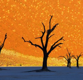 this is not a painting, dead trees park, namibia