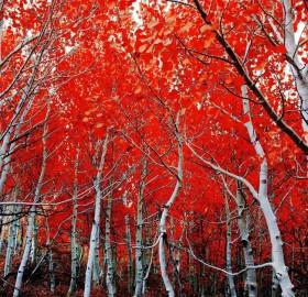 california in autumn